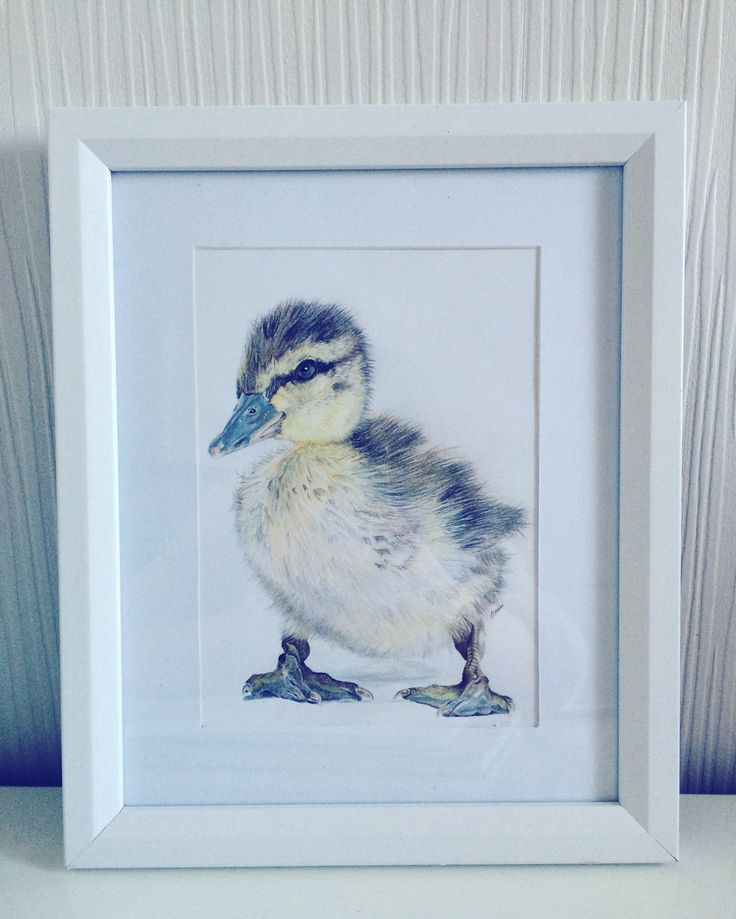 Duckling drawing coloured pencil @lytassia