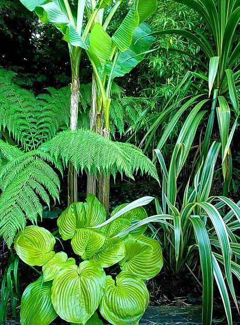 Ferns, arundo donax, bamboo