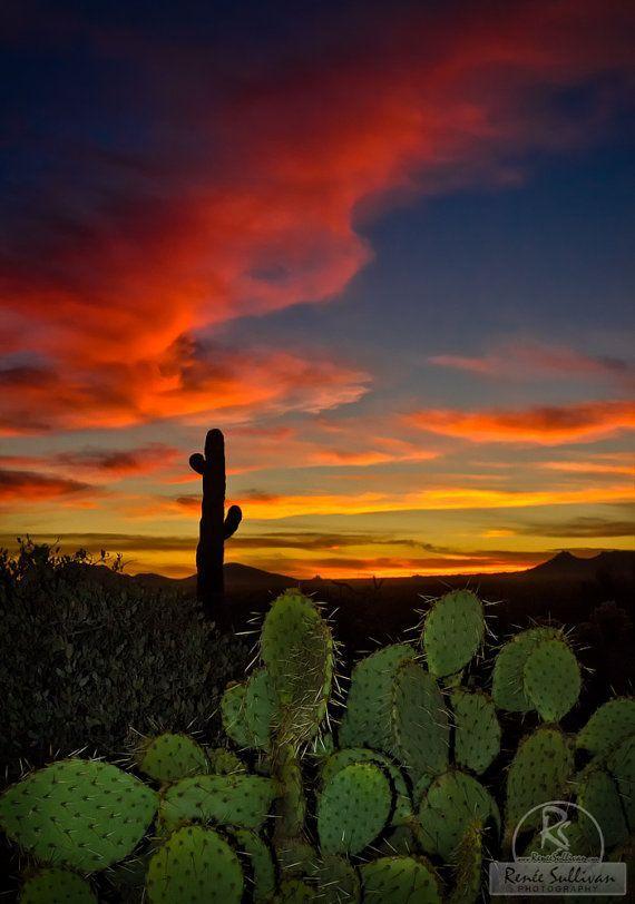 Sonoran Desert Sunset Sunrise Landscape Nature Arizona Saguaro Desert Sunset Desert Painting Sunset Painting