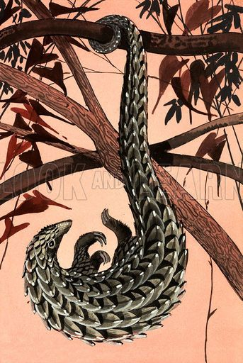 Pangolin illustration