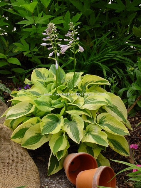 Deep Shade Garden Plants