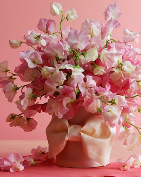 Sweet Pea- 1 of my fav. fav flowers. i think this is what heaven will smell like (if i make it)