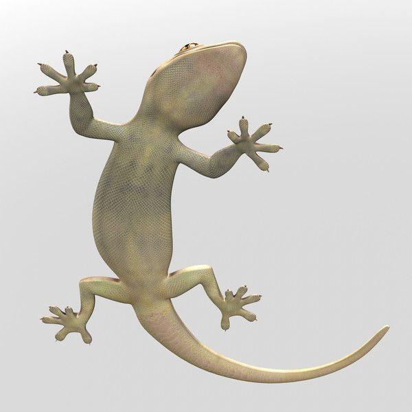 e0c2e33c094d55611ea88bd719d8ee98  amphibians reptiles - How To Get Rid Of Wall Lizards At Home