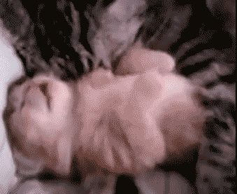Top 10 cutest kitten GIFs EVER! Yes, we just opened Pandora's box... - Dose