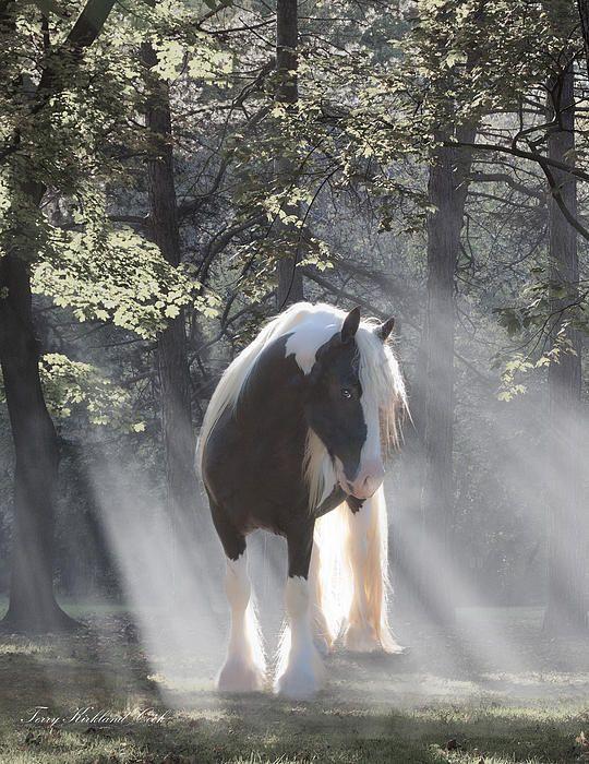 Mystic Gypsy Horse, als ik ooit de loterij mag winnen wil ik een tinker !