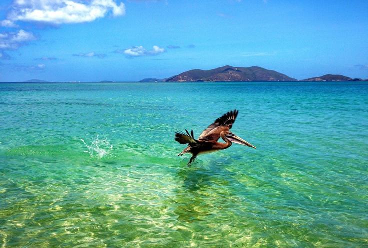 Image detail for -the British Virgin Islands, Spanish Town, Virgin Gorda, British Virgin ...