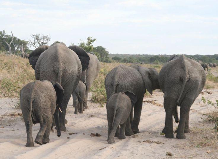Authentic African Adventures with Hanno van Rensburg in Botswana