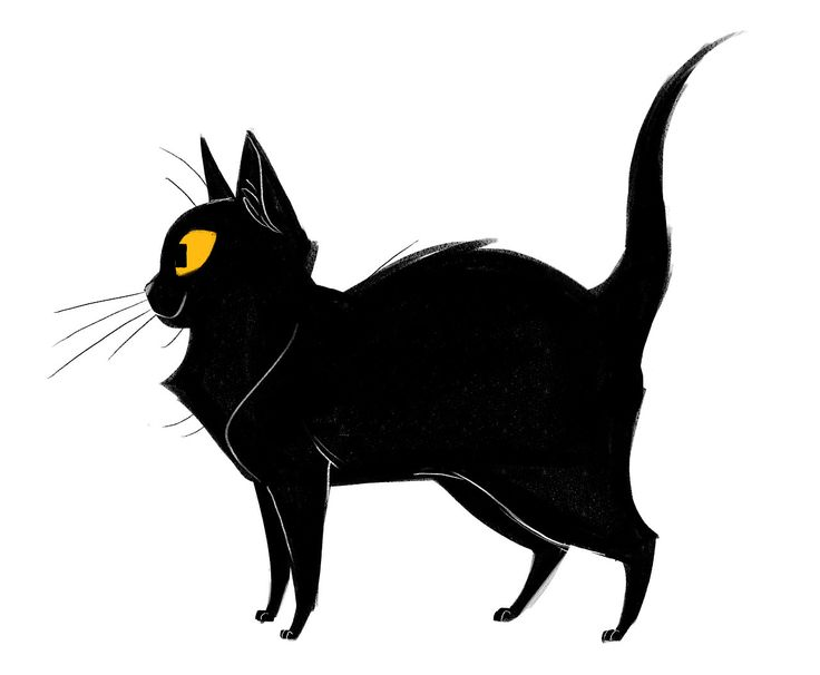 Black Cat Patreon