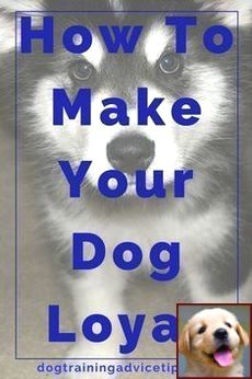 How To Train Dog Go Outside Tip 171501449 With Images Dog