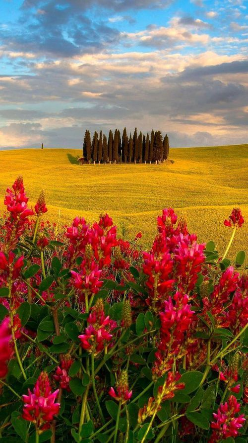 Best Places Images On Pinterest Landscapes Traveling And - Tranquil photos capture the beauty of tuscanys countryside
