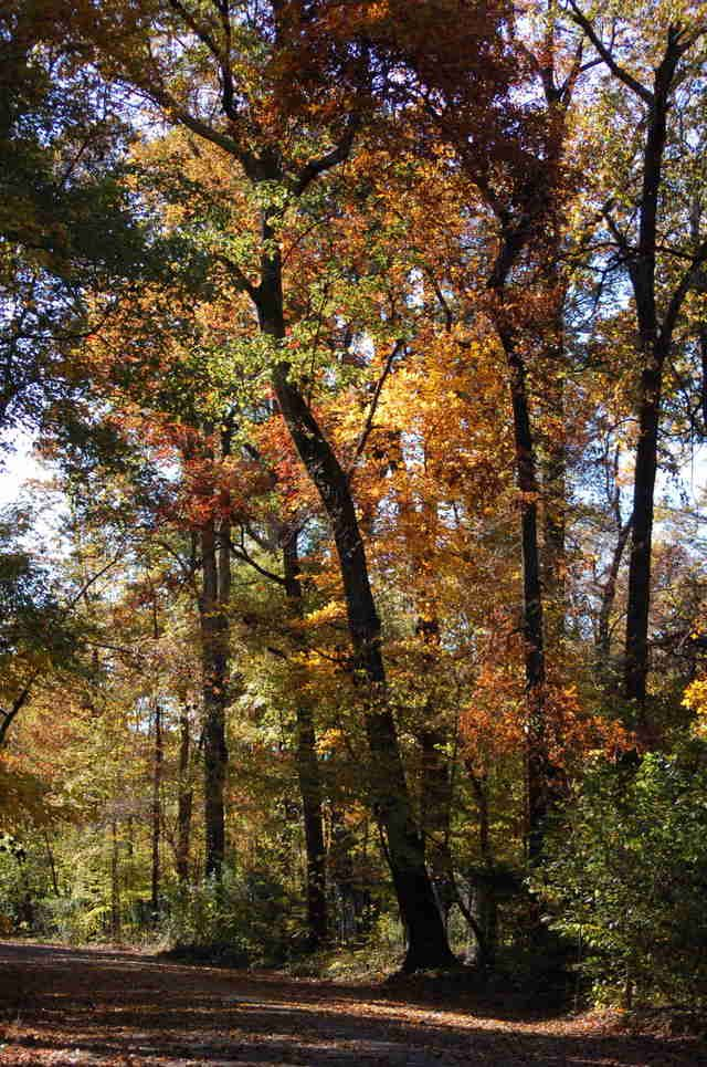 The Best And Most Beautiful Running Trails In Memphis Outdoors Run Hiking
