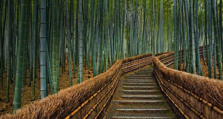El templo bambú 2