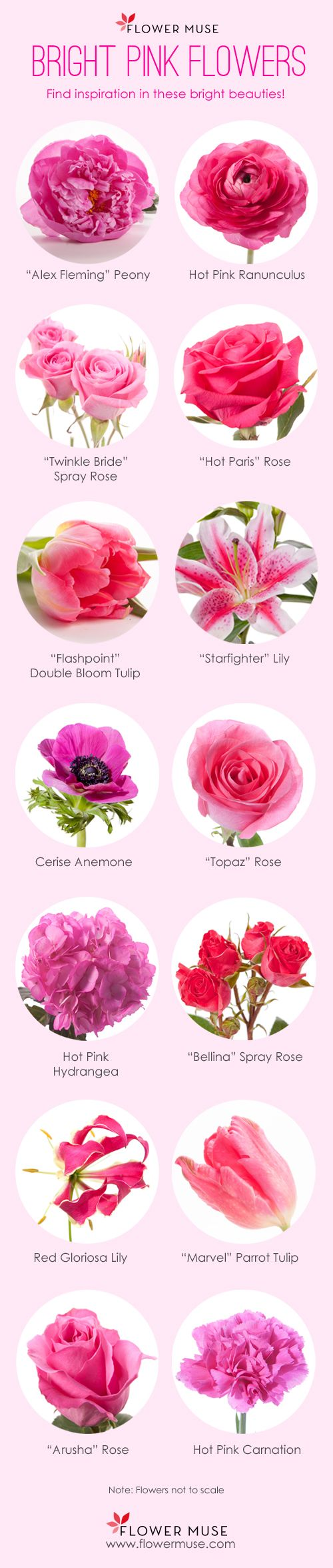 Our Favorite Bright Pink Flowers Flower inspiration season calendar