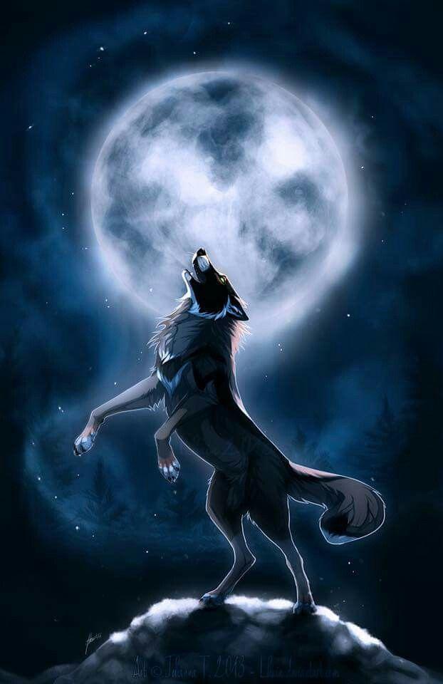 Wolf, Wolf Wallpaper, Anime Wolf