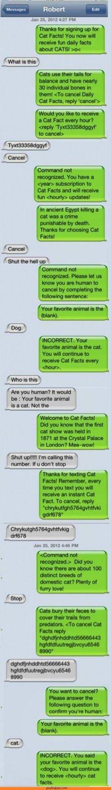 Hilarious Text About Man vs. Cats
