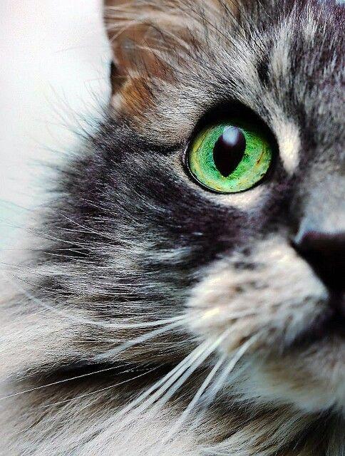 Cat-beautiful eye