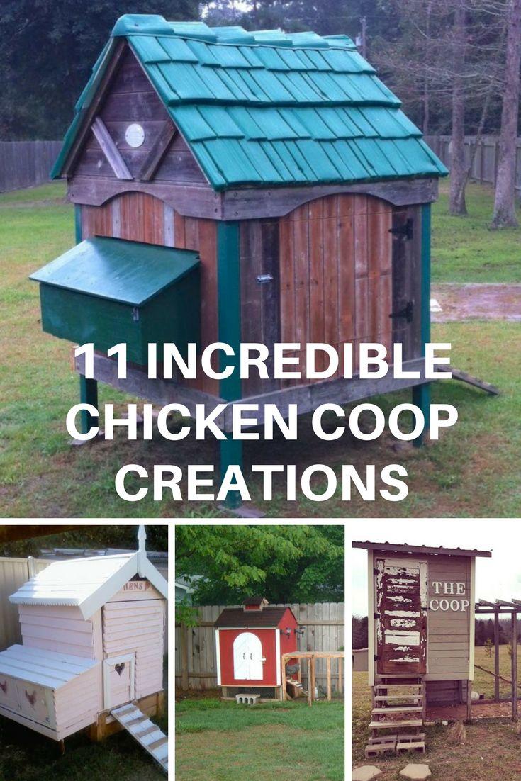 1339 best chicken ideas images on pinterest backyard chickens