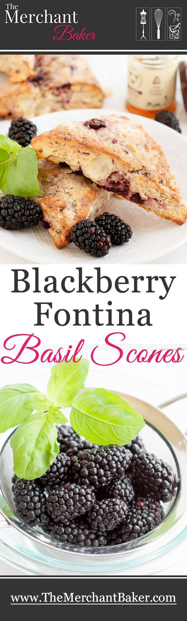 Blackberry Fontina Basil Scones. A sweet and savory scone, rich with creamy fontina, fresh blackberries and minty basil. Serve with a drizzle of honey. Eat them hot while the cheese is all melty!