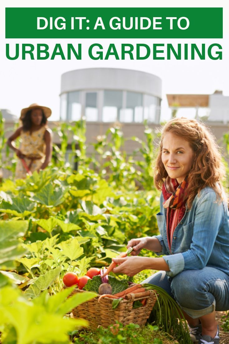 e0c5999946184dbc16890e6fda8b2d11 - What Is The Importance Of Urban Gardening