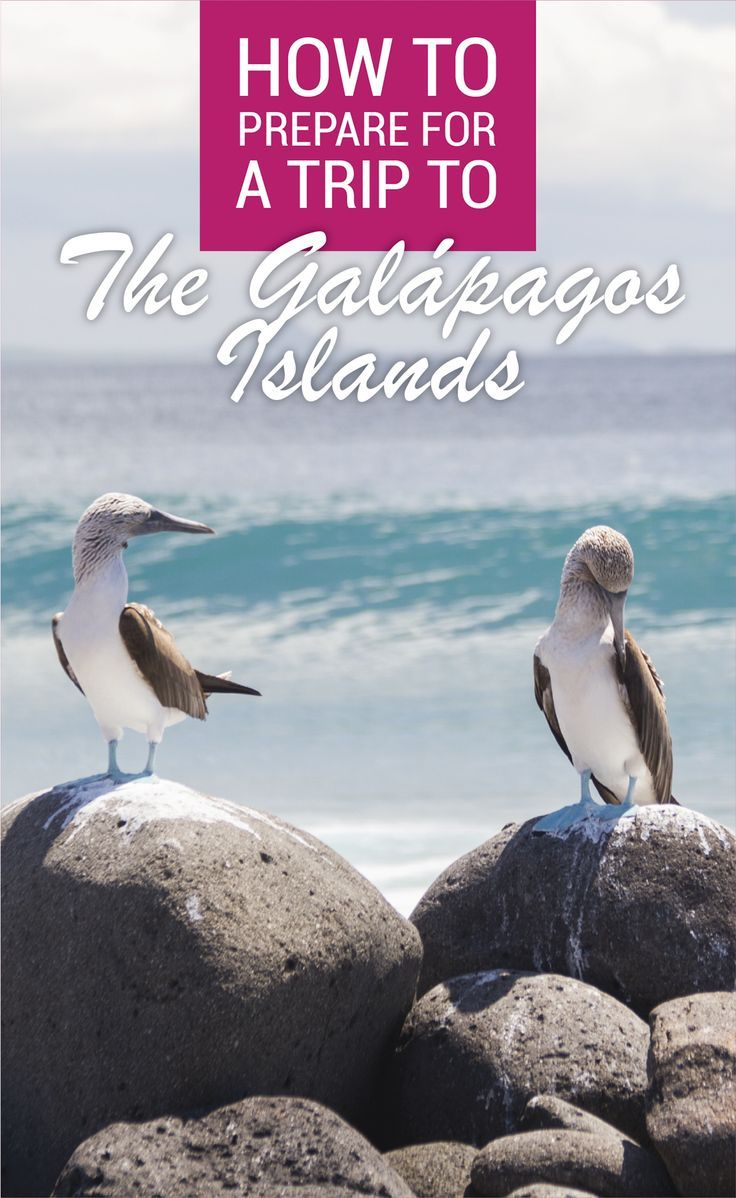 It is important to be prepared for a trip to the Galapagos Islands. Here are my top tips on How To Prepare For A Trip To The Galapagos Islands in Ecuador.  The Viking Abroad
