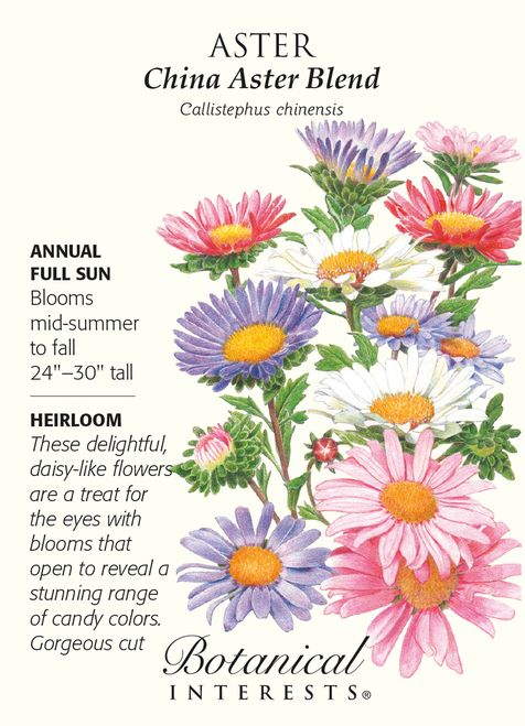China Aster Blend Seed 1 Gram In 2020 Flower Seeds Packets Botanical Flowers Heirlooms Flowers