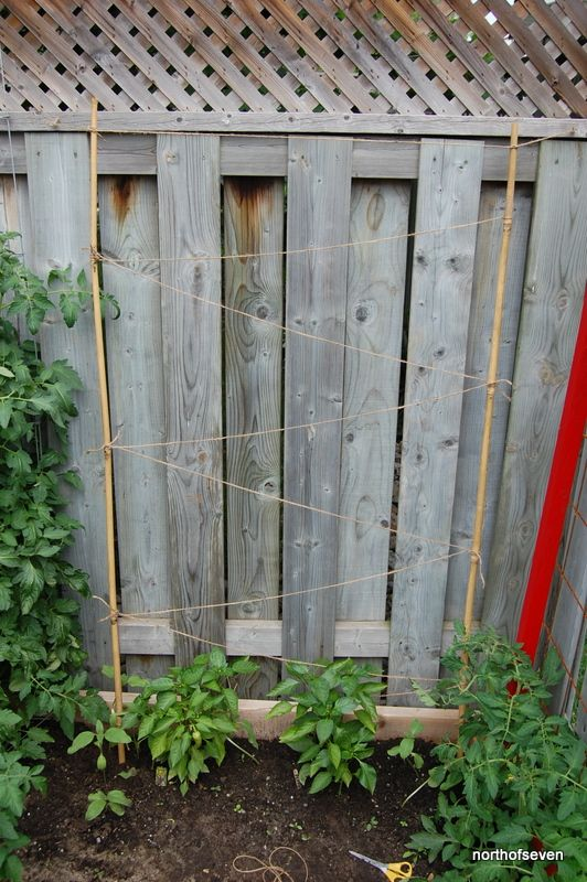 the approx. $4 DIY bean trellis