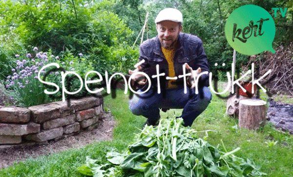 Spenót trükk -hogyan tegyük el a most termő spenótot a hideg hónapokra? Márk megmutatja: http://kert.tv/markfele-spenot-trukk/
