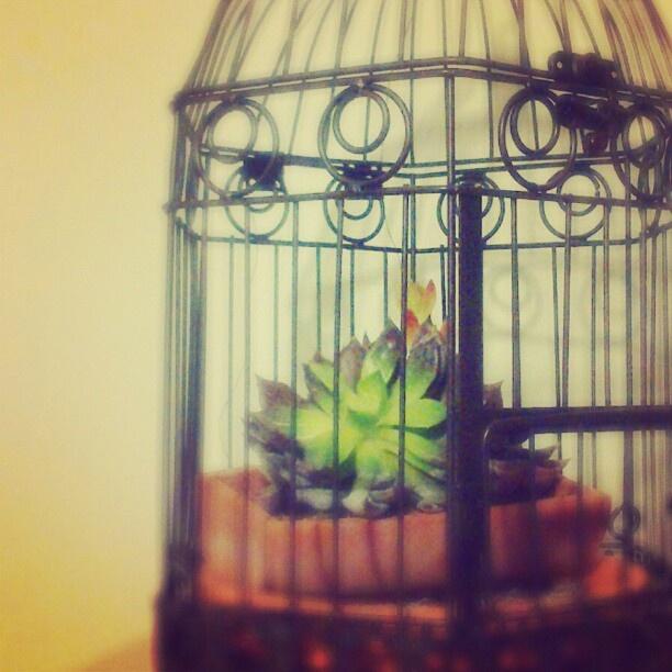 My little #flower growing on a #cage - @Inês Caraça- #webstagram