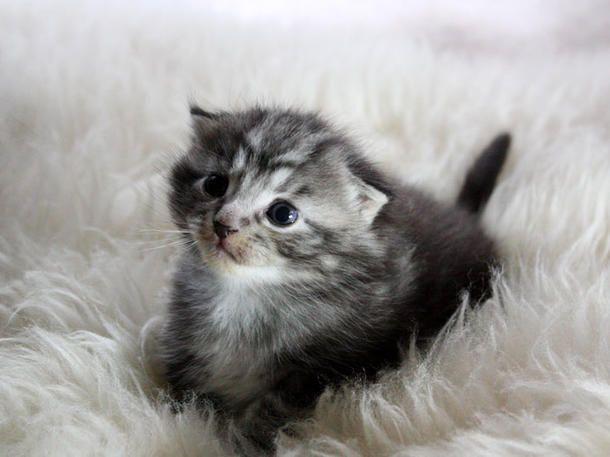 Laura, Alles für die Frau und Mach mal Pause suchten Deutschlands süßeste Katze: Hier sind die 40 Baby-Finalisten.