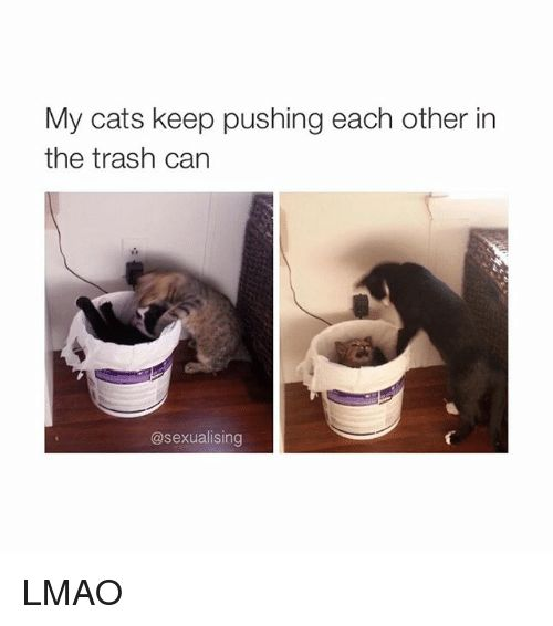 28 Cute and Funny Animal Pictures for an Aww Moment –
