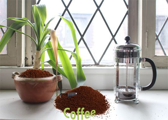 Coffee Can Be Used To Help Save Dying House Plants A