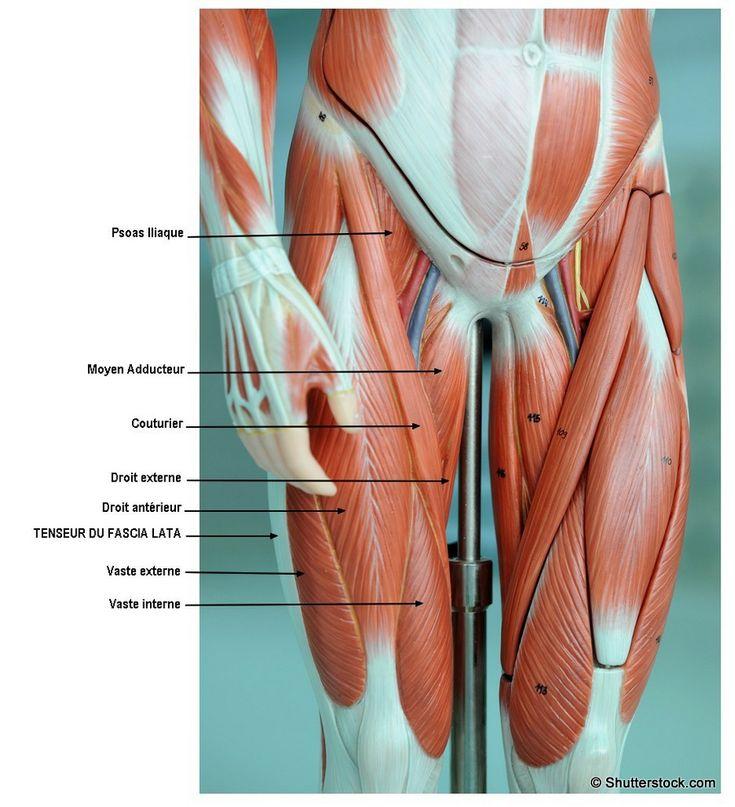 Douleur sur le cote exterieur de la cuisse 28 images for Douleur exterieur genou