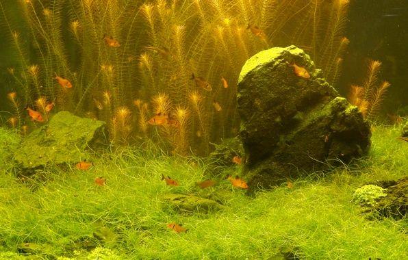 Фото обои широкоформатные, широкоэкранные, растения, widescreen, обои на рабочий стол, рыбка, обои, рыбки, fullscreen, HD wallpapers, полноэкранные, ...