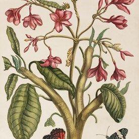 muurdecoratie wanddecoratie schilderij prent tekening kunst teylers museum vlinders