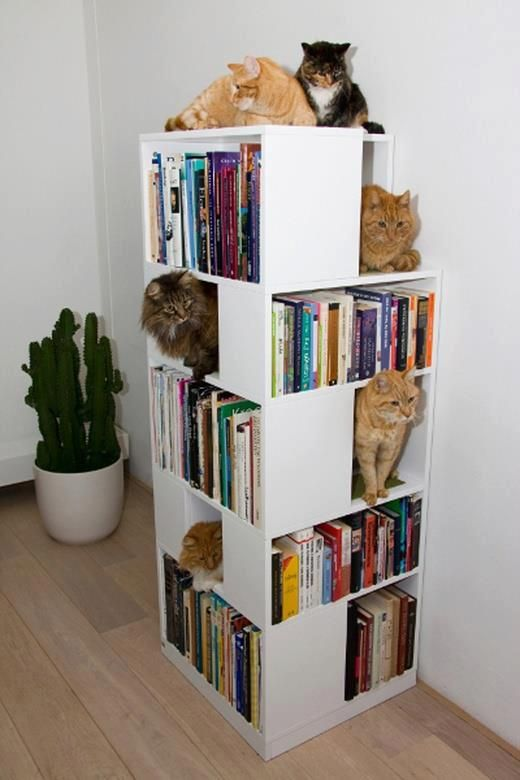I Love My Books And My Cats ♥