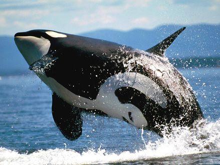 Los animales en peligro de extincion