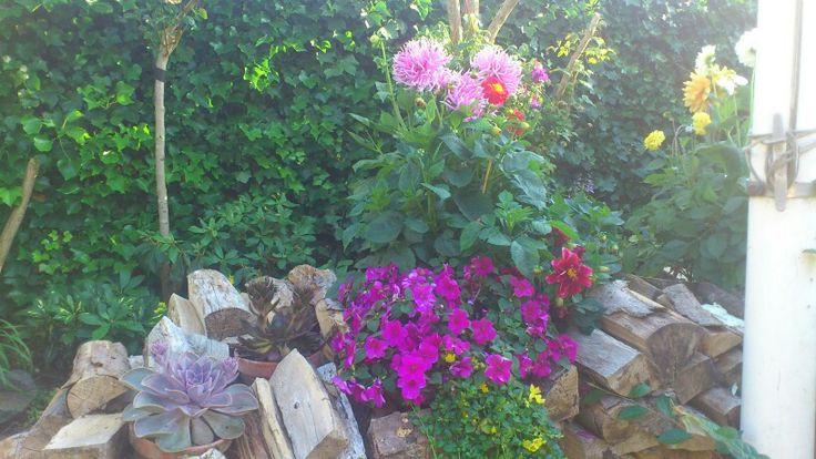Blomster krukker sat ned i brænde stakken