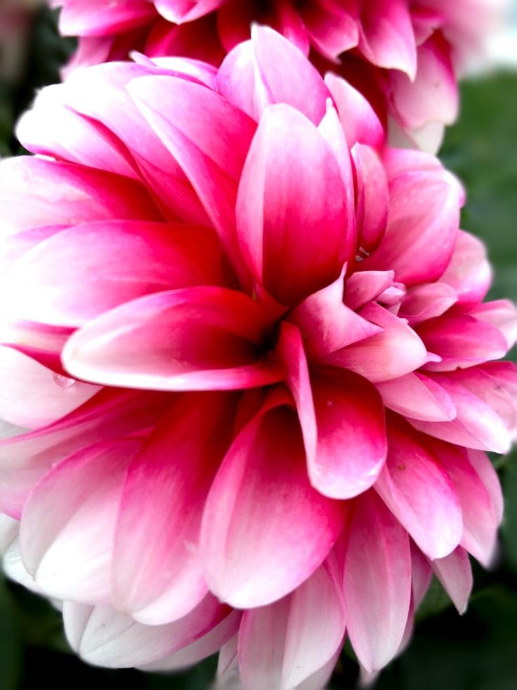 HAPPEL Photo Spread Flower #3
