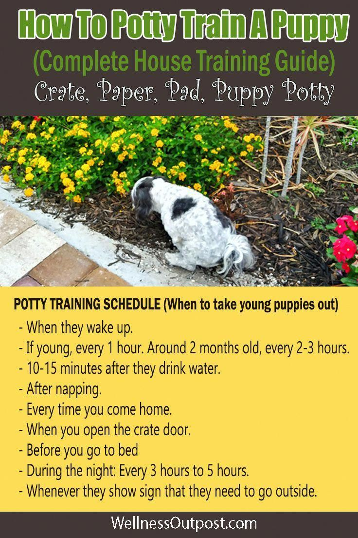 How To Potty Train A Puppy Complete House Training Guide Puppy Training Potty Training Puppy Puppy Potty Training Tips
