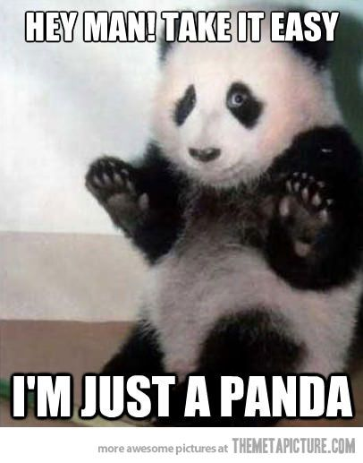 e0ca14b3d3f642e097485d568c06d5cd funny bears panda bears 96 best funny bears memes and pics images on pinterest funny