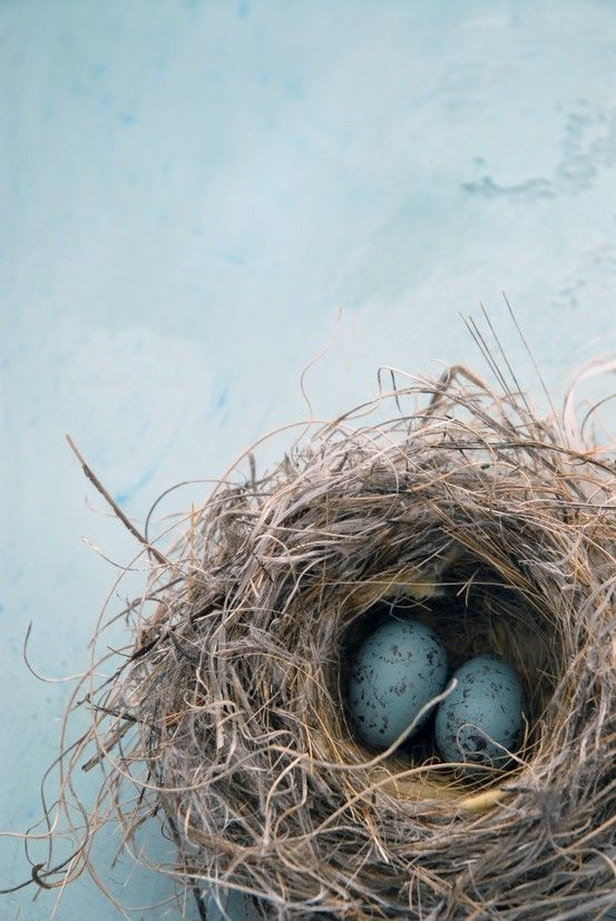 bird's nest, pretty pretty
