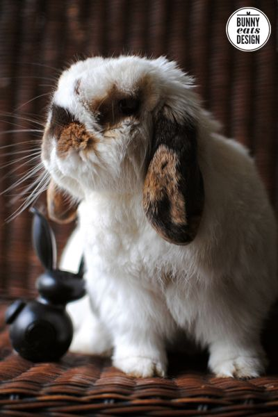 Big bunny rabbit