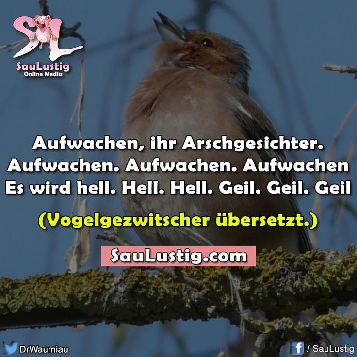 Good Morning Too In German : Best images about lustiges zum nachdenken sprüche on