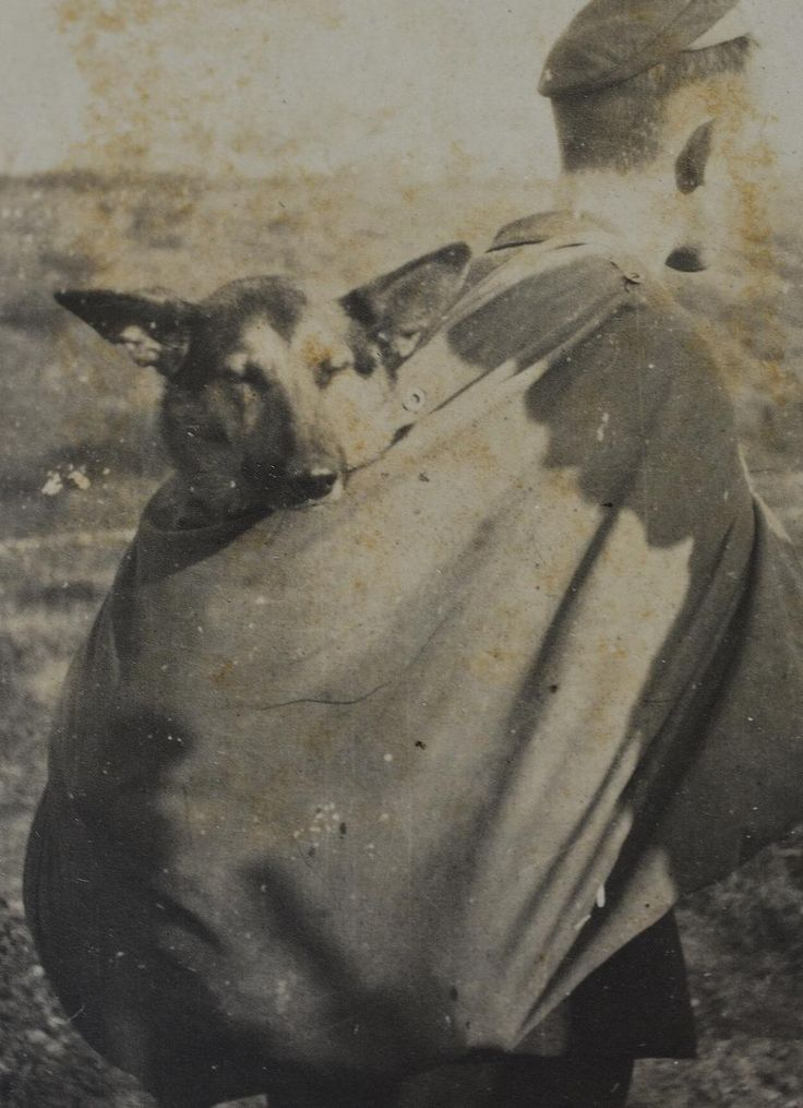 "WW1 Soldier With German Shepard Dog Named ""Ylka"" - antiquepooch"