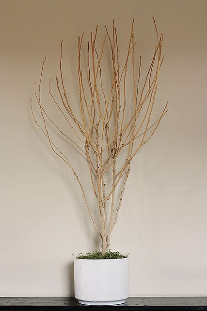 DIY potted tree branch, perfect for seasonal decorating | from Lulu the Baker