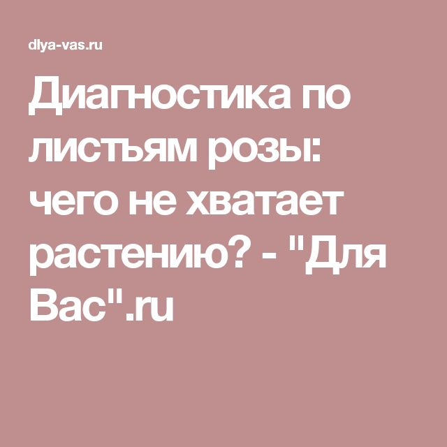 """Диагностика по листьям розы: чего не хватает растению? - """"Для Вас"""".ru"""