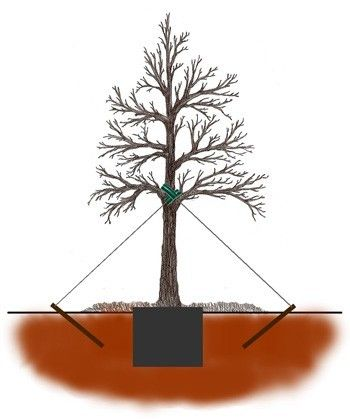 Stake and wire tree staking method