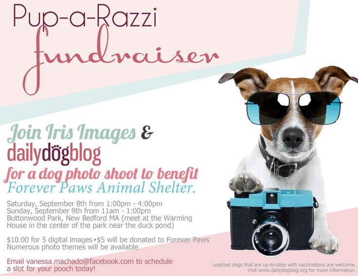 dailydogblog and Iris Images to Host Pup-A-Razzi Fundraiser to Benefit Forever Paws Animal Shelter — Daily Dog Blog