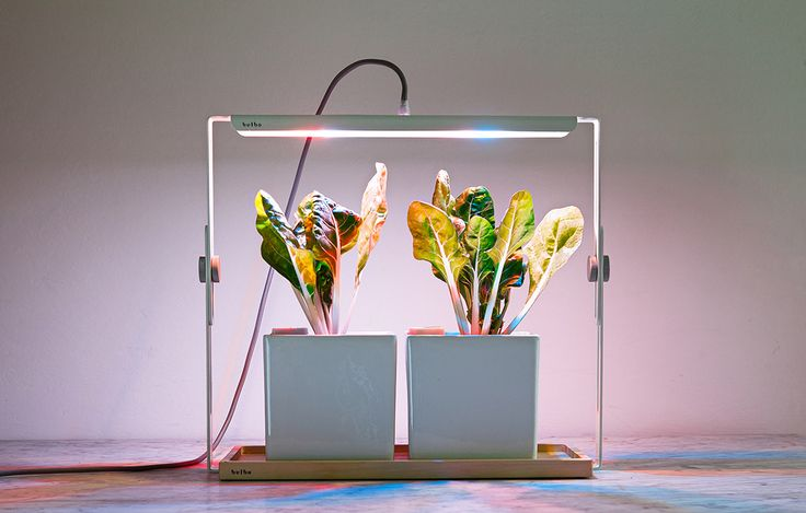 Quadra LED light for indoor gardening