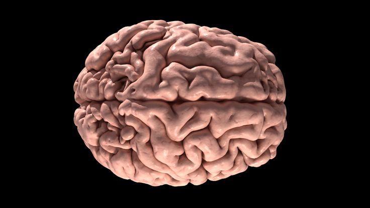 Human Brain 3d Scan Model Human Brain Brain Human